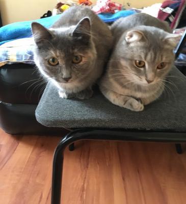 Услуги по перевозке кошки из Астрахань в Мытищи