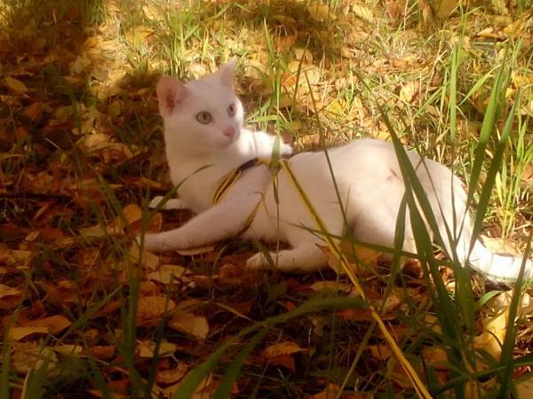 Сколько стоит перевезти кошку недорого из Сургута в Краснодар