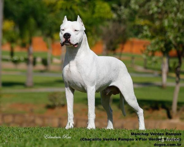 Доставка собаки  дешево из Волгоград в Симферополь