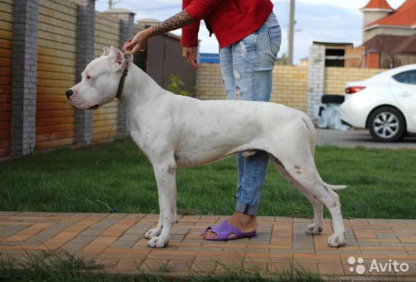 Доставить собаку  дешево из Волгоград в Симферополь