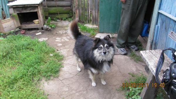 Доставить собак из Псков в Палкино Псковской области