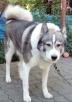 Перевозка собак недорого из Ростов-на-Дону в Санкт-Петербург