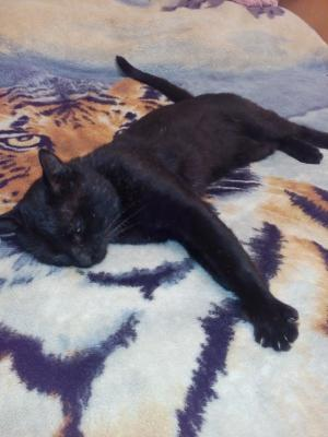 Доставка кошки дешево из Артем в Краснодар