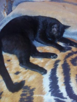 Перевезти кошку дешево из Артем в Краснодар