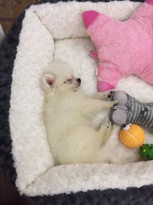 Доставка перевести собаку маленткую дешево из Владивосток в Хабаровск