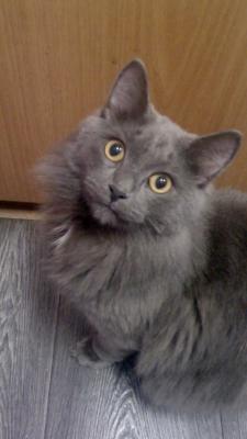 Отвезти котенка дешево из Челябинск в Санкт-Петербург