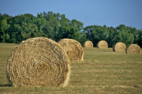Грузоперевозки сена дешево из Огуднево в Щелково