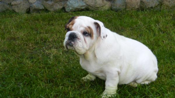 Сколько стоит отвезти собаку  недорого из Барнаул в Новокузнецк