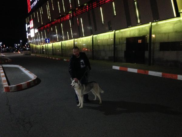 Сколько стоит доставить собаку недорого из Россия, Зеленоградское в Белоруссия, Могилев
