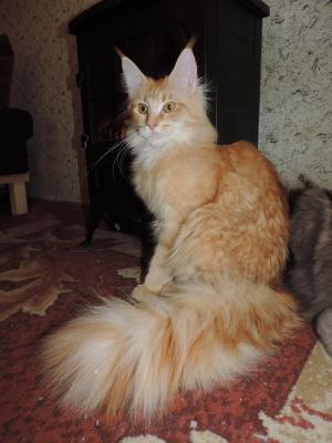 Доставить кошку недорого из Санкт-Петербург в Обнинск