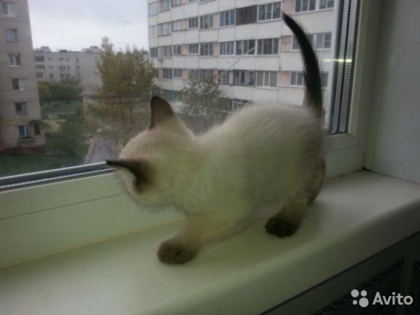 Транспортировка котенка из Санкт-Петербург в Иркутск