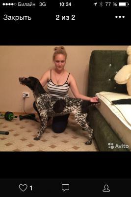 Сколько стоит отвезти собаку  недорого из Краснодар в Москва