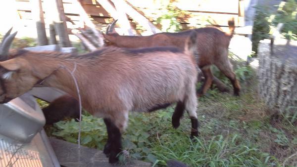 Перевозка других животных недорого из с. Березовка в алтайского края