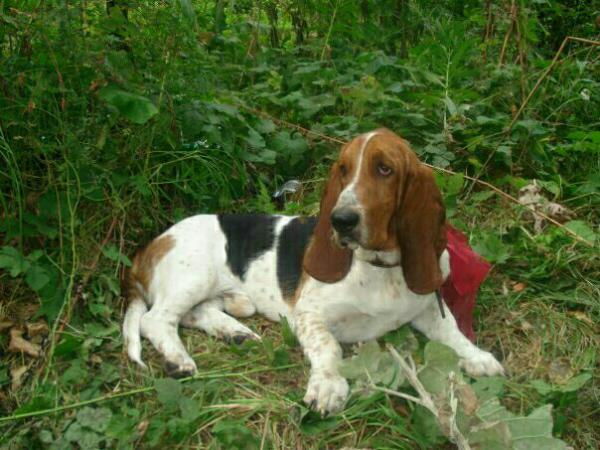 Перевозка собаки  дешево из Пенза в Краснодарский край