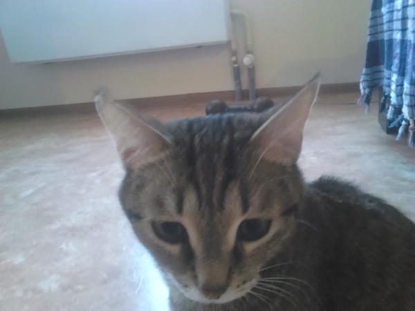 Доставка кошки из Челябинск в Новороссийск