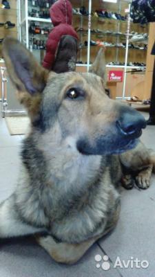 Перевезти собаку  из Пермь в Мурманская область