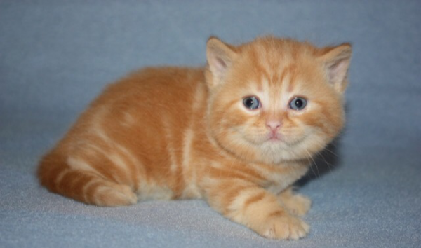 Сколько стоит транспортировка котенка В перевозке недорого из Новосибирск в Нижневартовск