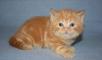 Доставка котенка дешево из Новосибирск в Нижневартовск