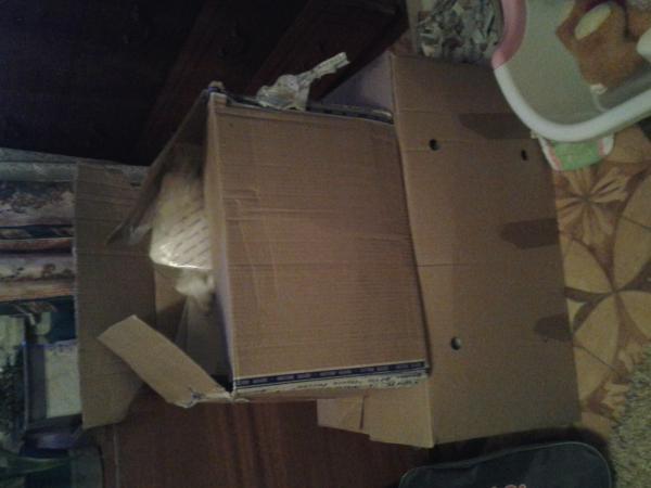 Заказ автомобиля для перевозки личныx вещей : Средние коробки, детская мебель из Череповца в Кузьмоловский