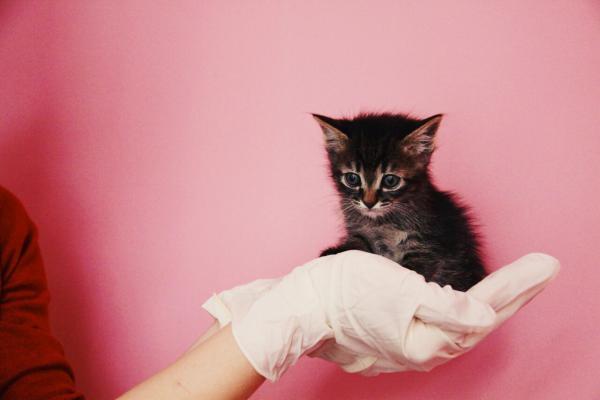 Доставить котенка В переноске дешево из Самары в Санкт-Петербург
