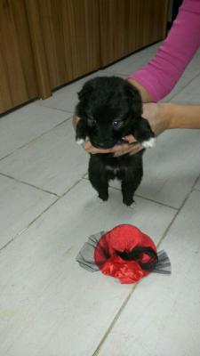 Доставка собак недорого из Тула в Санкт Петербург
