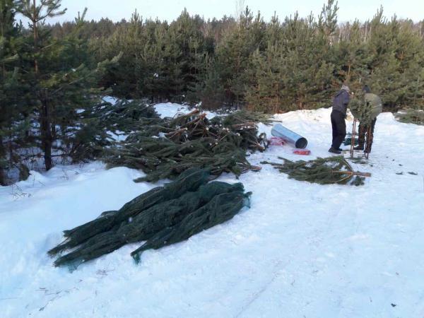 Автомобиль для перевозки Сосны новогодней попутно из Екатеринбурга в Севастополь