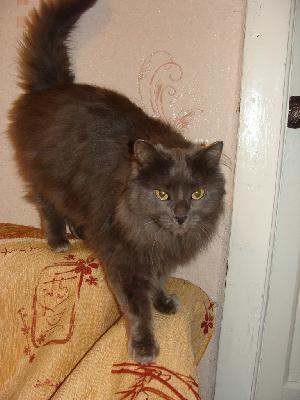 Услуги по доставке кошки  из Орска в Омск