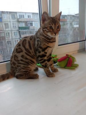 Транспортировать кота дешево из Кургана в Пермь