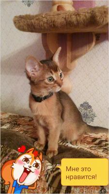 Доставка котенка из Сана в Мурманск
