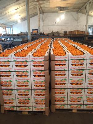 Доставка мандарина из Сочи в Иркутск