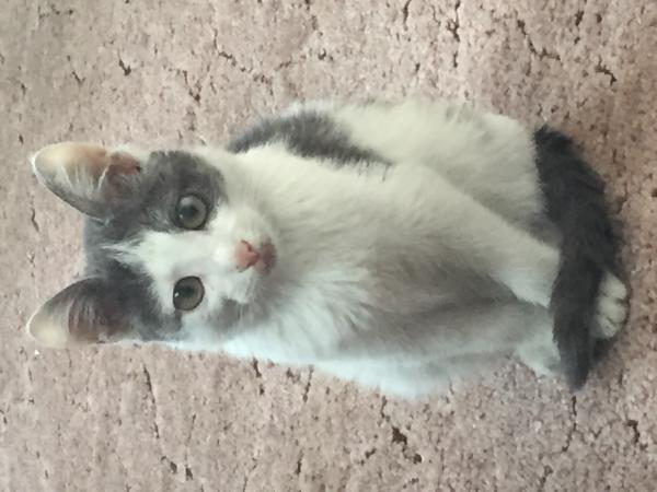 Доставить котенка недорого из Иркутска в Красноярск