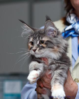 Перевезти кошку из Москвы в Санкт-петербург