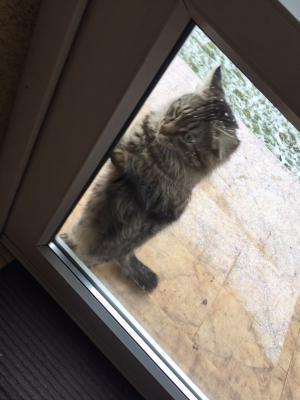 Перевезти кошку недорого из Ростова-на-Дону в Таганрог