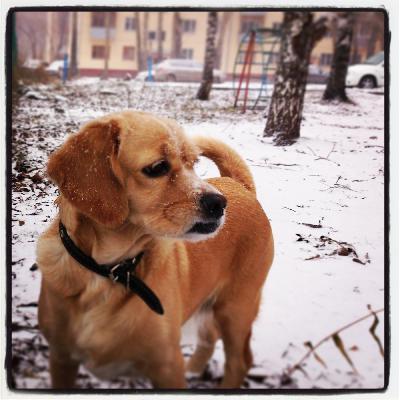 Доставка собак из Новосибирска в Москву