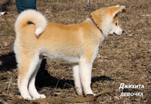 Доставка собак из Воронежа в Астрахань