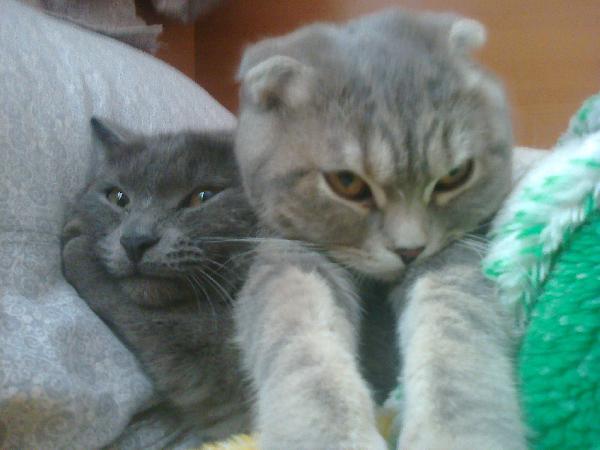 Доставка кошек из Мурманска в Таганрог