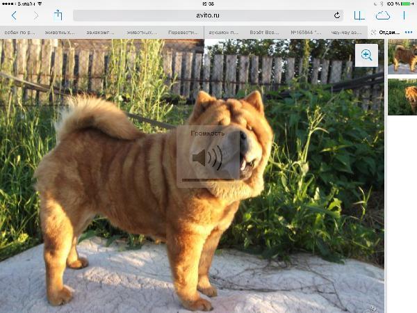 Доставка собак из Красноярска в Лабинска