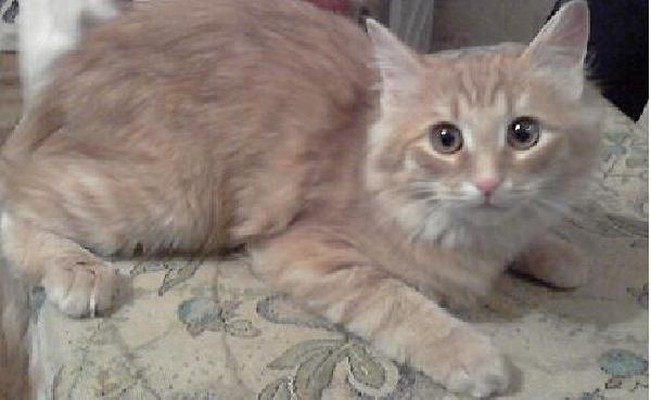 Доставка кошек из Санкт-петербурга в Москву