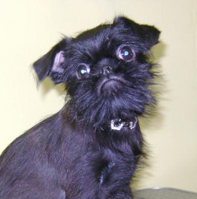 Сколько стоит доставка щенка недорого из Озерска в Тольятти