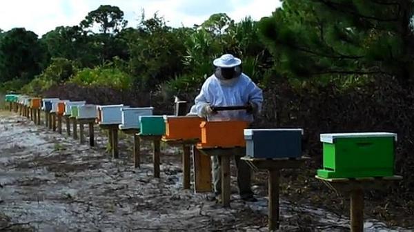 Нуклеусы для пчел фото