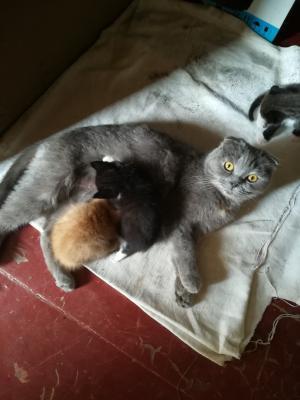 Отвезти котенка  2 мес автотранспортом из Таганрога в Тюмень