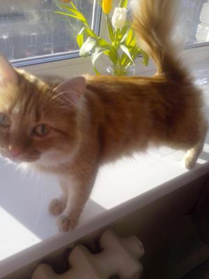 Доставить кота автотранспортом из Томска в Апшеронска