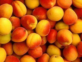 Перевозка ягод из Светлограда в Балашиху