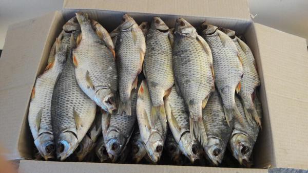 Доставка рыбы из Россия, Волгодонск в Чешская Республика, Прага